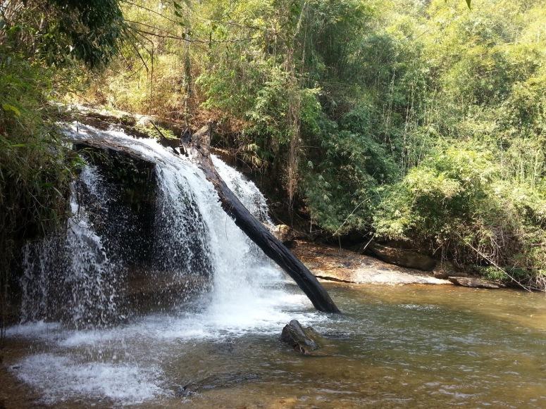 倒下的大樹樹幹剛好卡在瀑布中,是大自然的完美傑作。