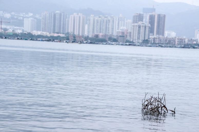 遠望香港最北的沙頭角,一個需要禁區紙才可以入去的地方